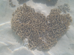 Heart shaped coral